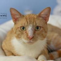 Adopt A Pet :: Joey - Edwardsville, IL