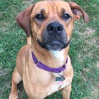 Adopt A Pet :: Trina - Kansas City, MO