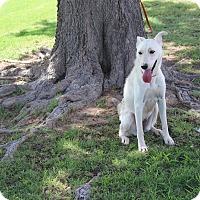 Adopt A Pet :: A11 Corina - Odessa, TX