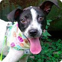 Adopt A Pet :: Kimmy - San Ramon, CA