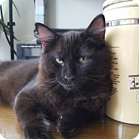 Adopt A Pet :: Ryuu - Vancouver, BC