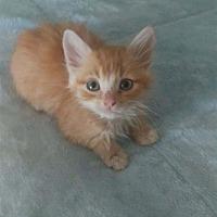 Adopt A Pet :: Tigger - Vallejo, CA