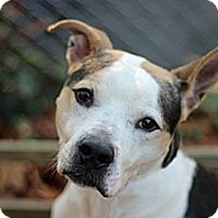 Adopt A Pet :: Bandit - Port Washington, NY