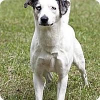 Adopt A Pet :: Cosmo - Cashiers, NC