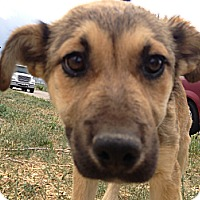 Adopt A Pet :: Silly - Westminster, CO