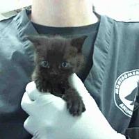 Adopt A Pet :: MENOS - Conroe, TX