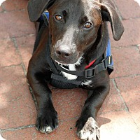 Adopt A Pet :: Becky (Has Application) - Washington, DC