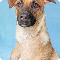 Adopt A Pet :: Saratoga - Encinitas, CA