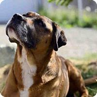Adopt A Pet :: RILEY - Palmer, AK