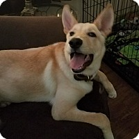 Adopt A Pet :: Kylo - Greeneville, TN