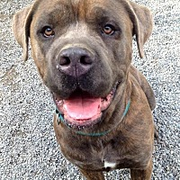 Adopt A Pet :: Apollo - Stroudsburg, PA