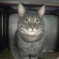 Adopt A Pet :: Romeo - New York, NY