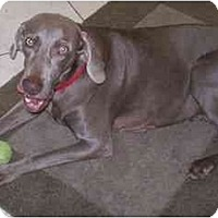 Adopt A Pet :: Roxie  **ADOPTED** - Eustis, FL
