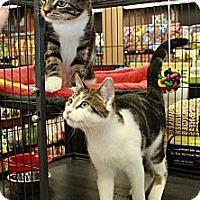 Adopt A Pet :: Sam and Dean - Halifax, NS