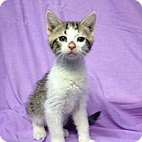 Adopt A Pet :: Winston - Orlando, FL