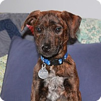 Adopt A Pet :: Nala - Hamburg, PA