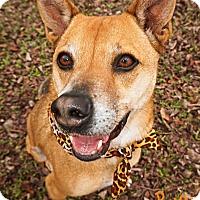 Adopt A Pet :: June Bug - Converse, TX