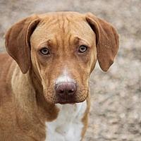 Adopt A Pet :: Nola Beatrice - Hooksett, NH