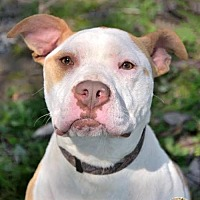 Adopt A Pet :: Punkin - Mt. Vernon, IN