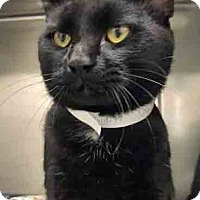 Adopt A Pet :: ADOPTED!!!   Dude - Channahon, IL