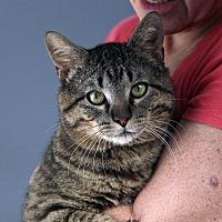 Adopt A Pet :: Thaddeus - St. Louis, MO