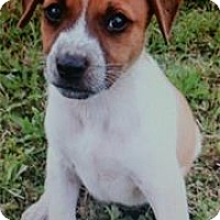 Adopt A Pet :: Buster - Cottonport, LA