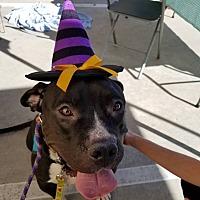 Adopt A Pet :: Lindy - Hawthorne, CA