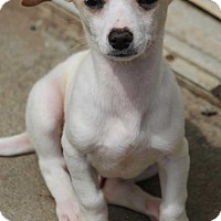 Adopt A Pet :: Simon - Yuba City, CA