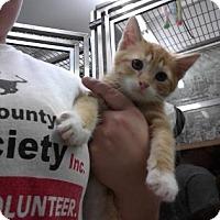 Adopt A Pet :: Nermal - Paducah, KY