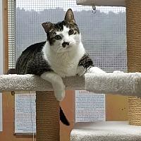 Adopt A Pet :: Spanky - Goshen, NY