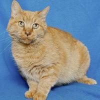 Adopt A Pet :: DUMPLING - Gloucester, VA