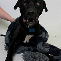 Adopt A Pet :: Russy/beau - Troy, VA