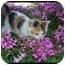 Photo 2 - Calico Kitten for adoption in Bakersfield, California - Cleo