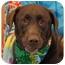 Photo 2 - Labrador Retriever Dog for adoption in Las Vegas, Nevada - Reagan