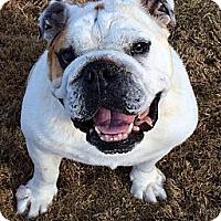 Adopt A Pet :: Bam Bam - Cibolo, TX