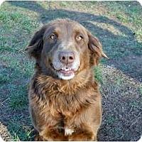 Adopt A Pet :: Chocolate - Conyers, GA