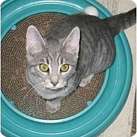 Adopt A Pet :: GiGi kitten - Cincinnati, OH