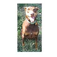 Adopt A Pet :: Zoey--adopted! - New Richmond, OH