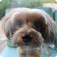 Adopt A Pet :: Bunny - Phoenix, AZ