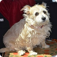Adopt A Pet :: Angel - Meridian, ID