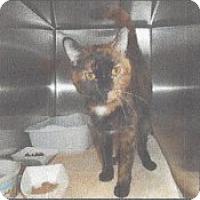 Adopt A Pet :: Addison - McHenry, IL