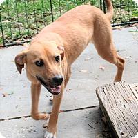 Adopt A Pet :: Kelly - Umatilla, FL