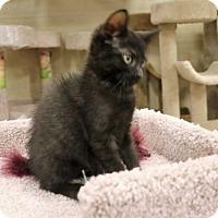 Adopt A Pet :: Spooky - Mackinaw, IL