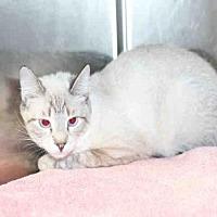 Adopt A Pet :: *NEVADA* - Salt Lake City, UT