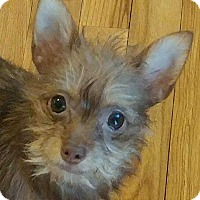 Adopt A Pet :: Sissy - Barnesville, GA