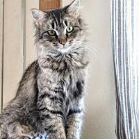 Adopt A Pet :: Tessa - Taylor, MI