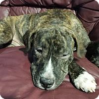 Adopt A Pet :: Titan - Conroe, TX