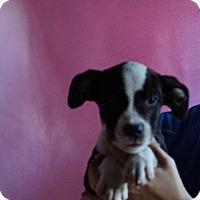 Adopt A Pet :: Sparkey - Oviedo, FL