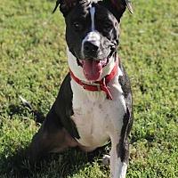 Adopt A Pet :: Lana - Mesa, AZ