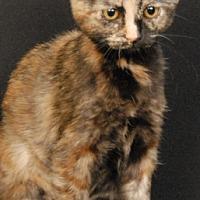 Adopt A Pet :: Precious - Newland, NC